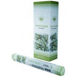 White Sage wierook (Green...